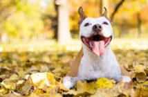 imena za pse - sretan pas