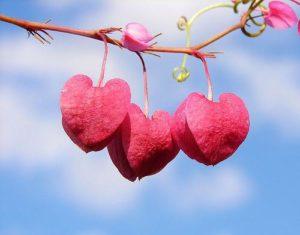 Ljubav u Islamu - hadisi o ljubavi izmedju muskarca zene